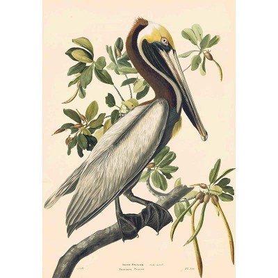 Oppenheimer Audubon Brown Pelican