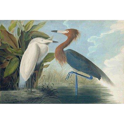 Oppenheimer Audubon Reddish Egret