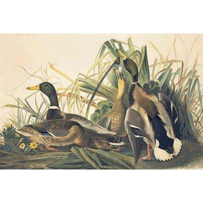 Oppenheimer Audubon Mallard Duck