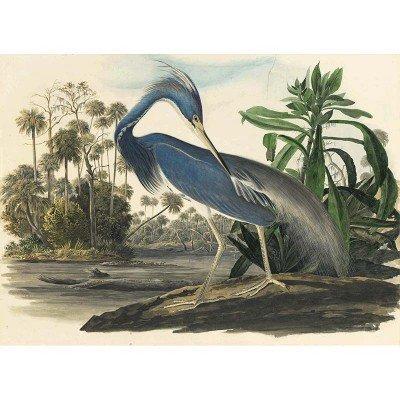 Oppenheimer Audubon Louisiana Heron