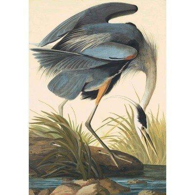 Oppenheimer Audubon Great Blue Heron