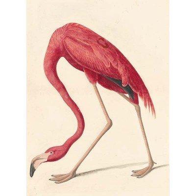 Oppenheimer Audubon American Flamingo