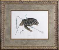 """Mark Catesby (After) Engraving """"The Green Turtle"""""""