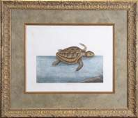 """Mark Catesby (After) Engraving, """"The Green Turtle"""""""