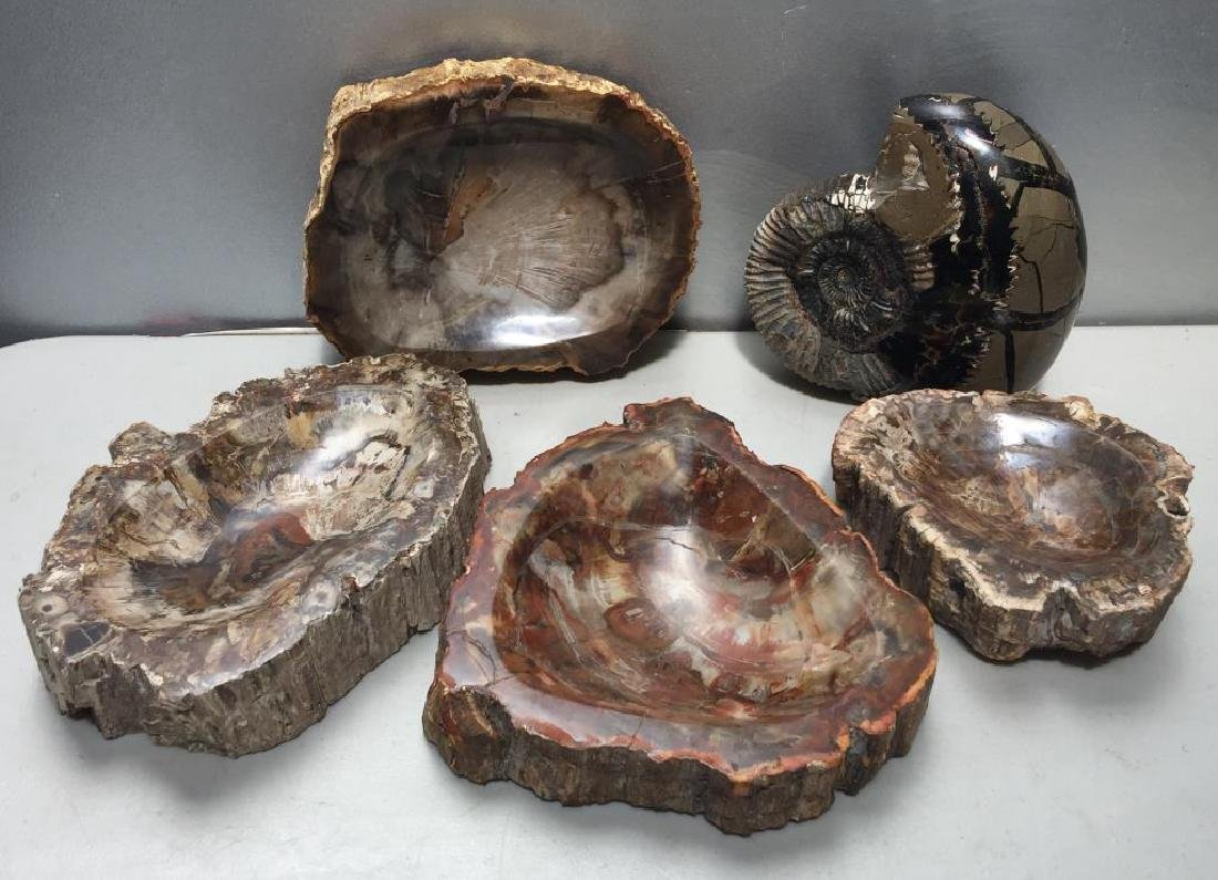 Decorator Lot of Petrified Wood and Fossil.