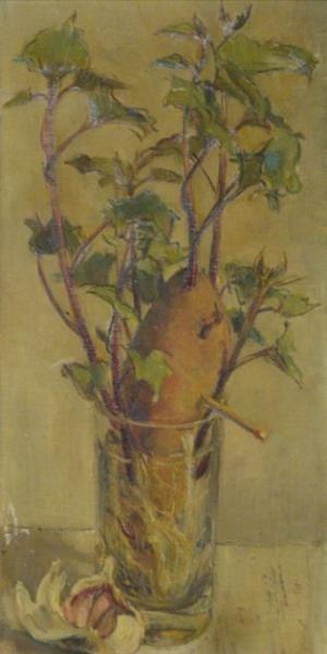 504: UNKNOWN. Flowering Potato & Garlic Still Life.