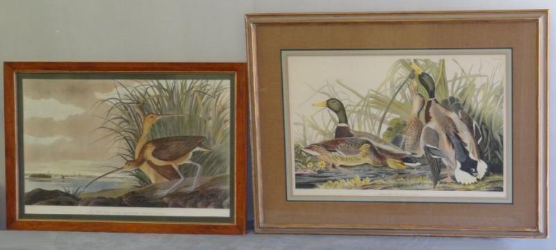 Two Hand Colored Audubon Prints.