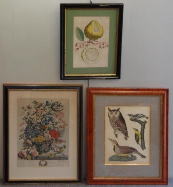 3 Hand Colored Prints.