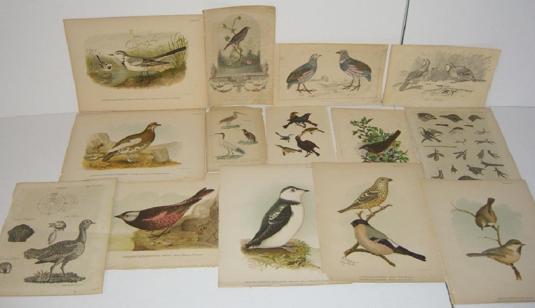 14 18th/19th century lithographs/engravings