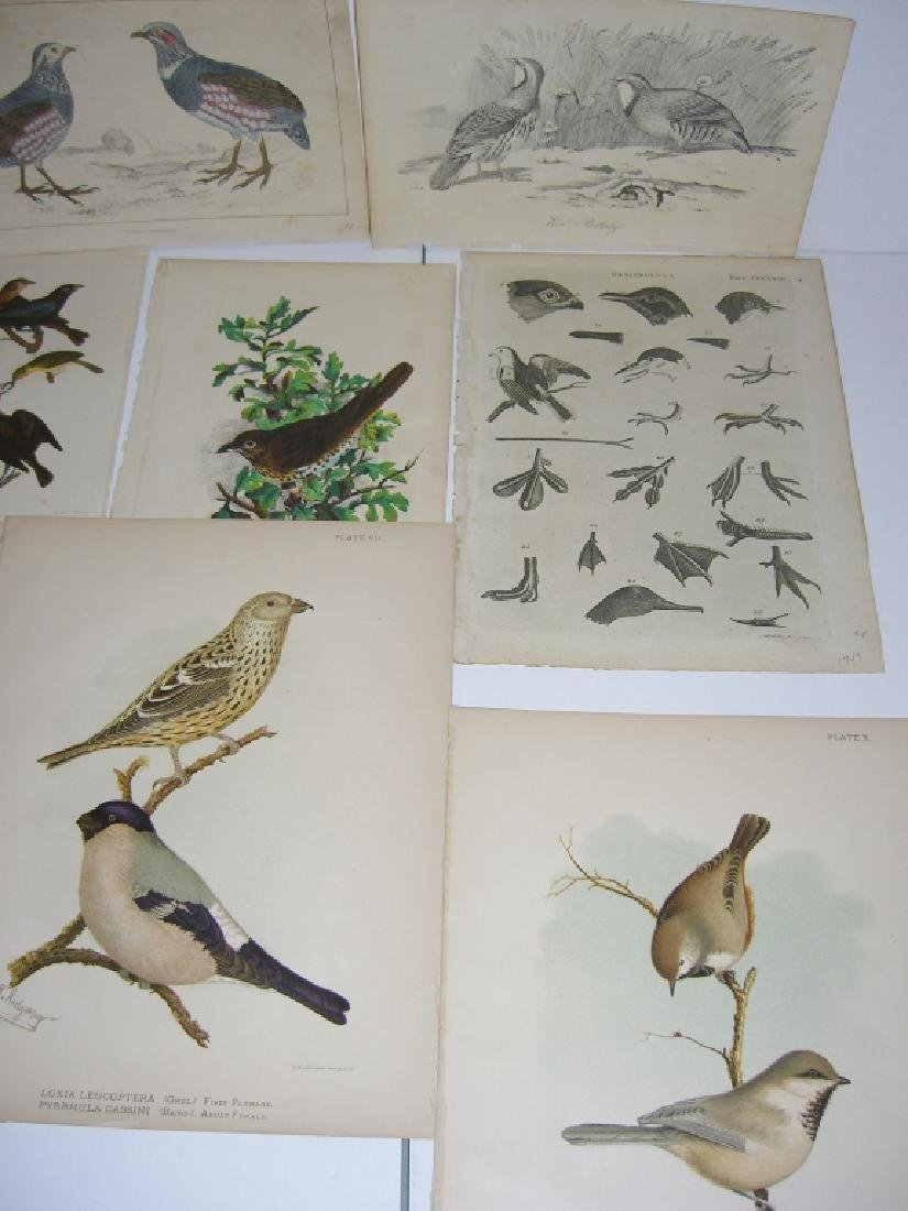 14 18th/19th century lithographs/engravings - 5