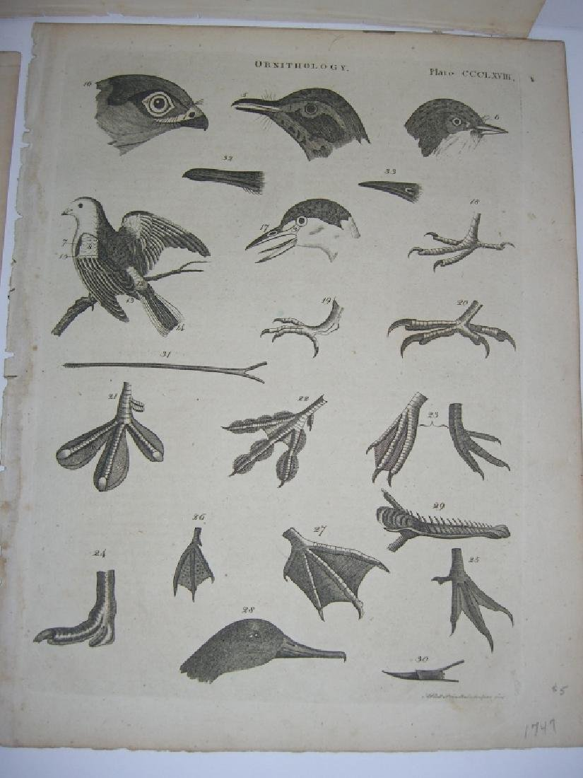 14 18th/19th century lithographs/engravings - 6