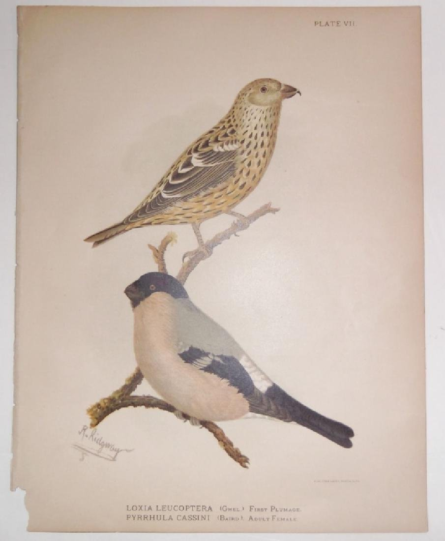 14 18th/19th century lithographs/engravings - 8