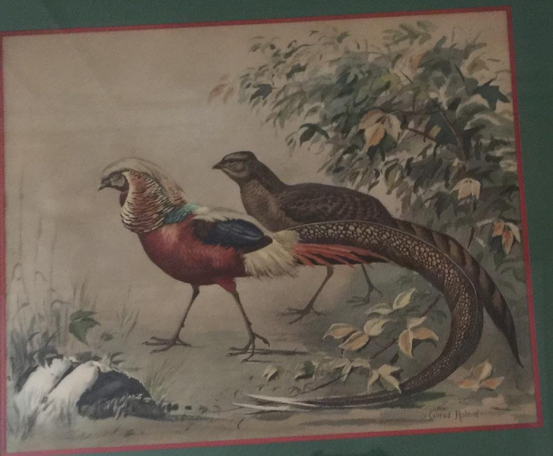 Hand-Colored Lithe PHEASANTS LISTED CONRAD ROLAND
