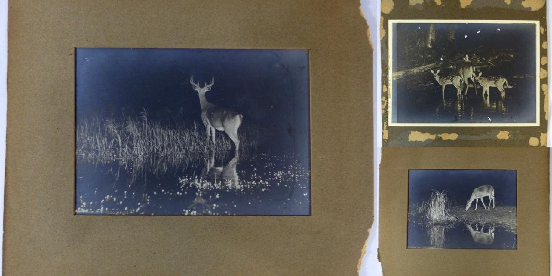 3pc GEORGE SHIRAS III PHOTOGRAPHS OF DEER AT NIGHT