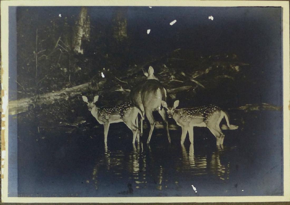 3pc GEORGE SHIRAS III PHOTOGRAPHS OF DEER AT NIGHT - 2