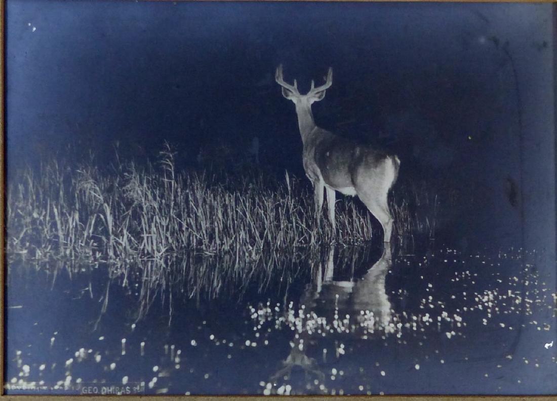 3pc GEORGE SHIRAS III PHOTOGRAPHS OF DEER AT NIGHT - 3
