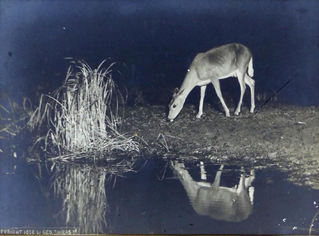 3pc GEORGE SHIRAS III PHOTOGRAPHS OF DEER AT NIGHT - 4