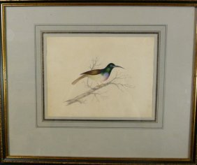 English Hand Painted & Watercolor Bird Portrait