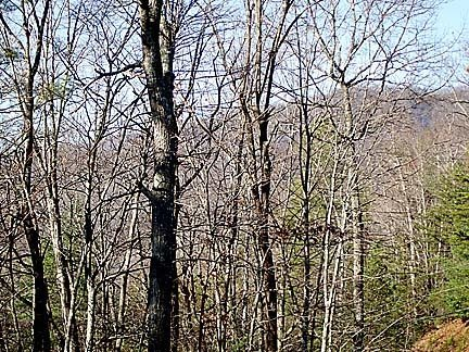 8E: Real Estate Mountain Lot