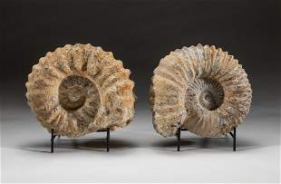 Pair Fossil Ammonite Table Sculptures
