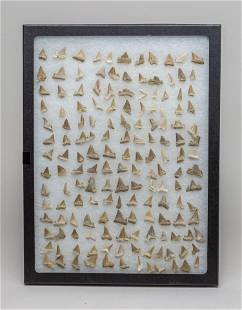 Set Shark Tooth Collection