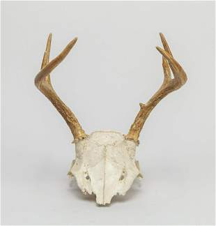 Collectible Horn Table Sculpture