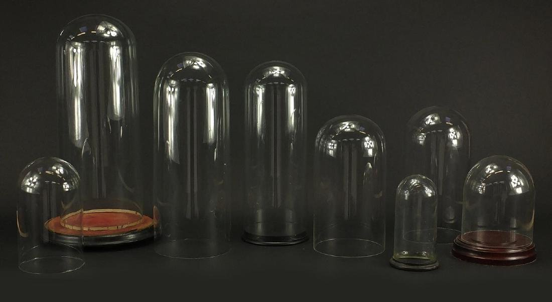 Eight taxidermy interest glass domes, three with stands, the largest 44cm high Further condition