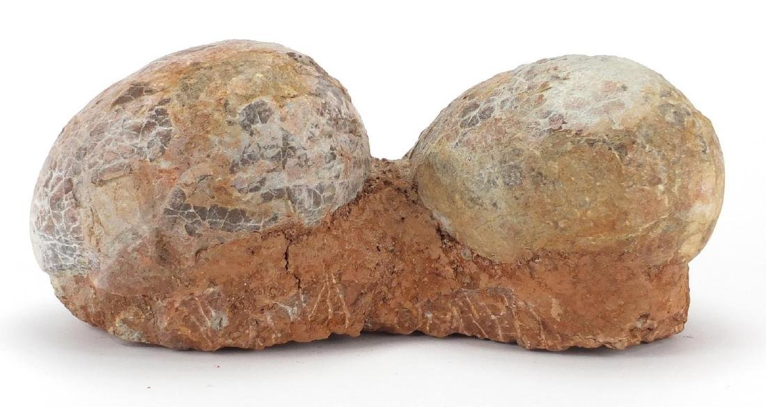 Large cluster of two fossilised dinosaur eggs, 13.5cm H x 31cm W x 13cm D Further condition