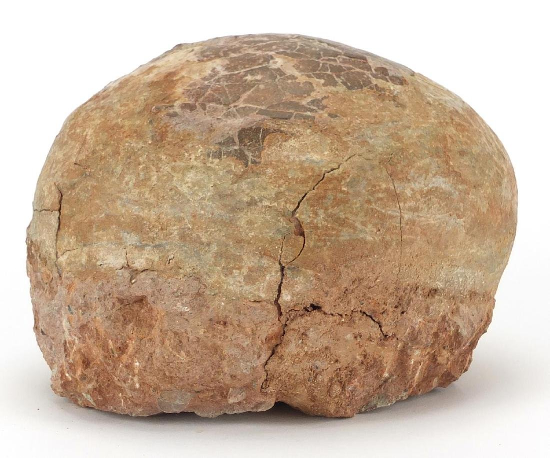 Large fossilised dinosaur egg, 12cm H x 18cm W x 14cm D Further condition reports can be found at