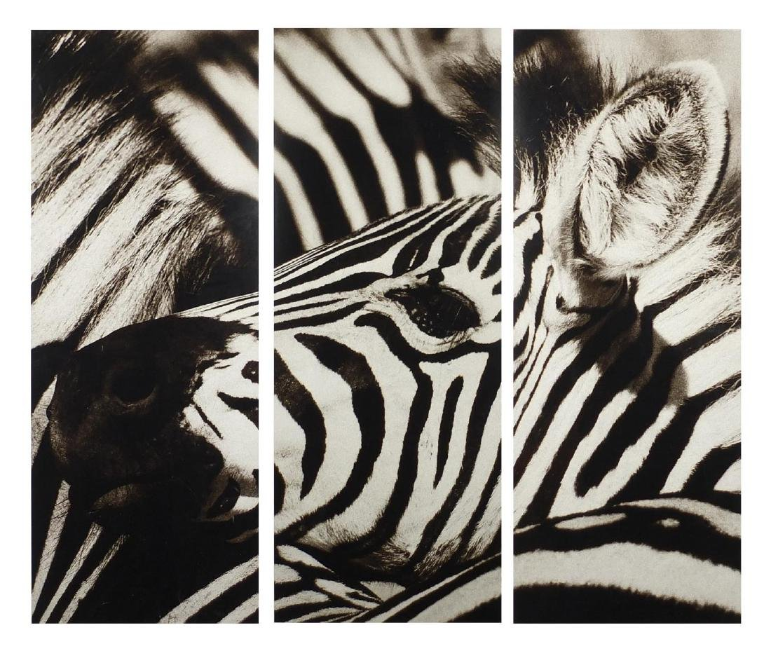 Contemporary Trowbridge triptych photograph of a zebra's head by Jamie Thom, limited edition 19/295,