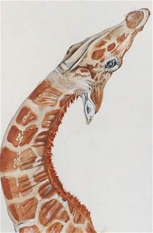 Will Smith - Portrait of a giraffe, wate...