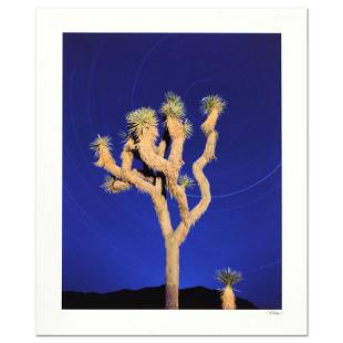 "Robert Sheer ""Joshua Tree"" Limited Edition Photo on"