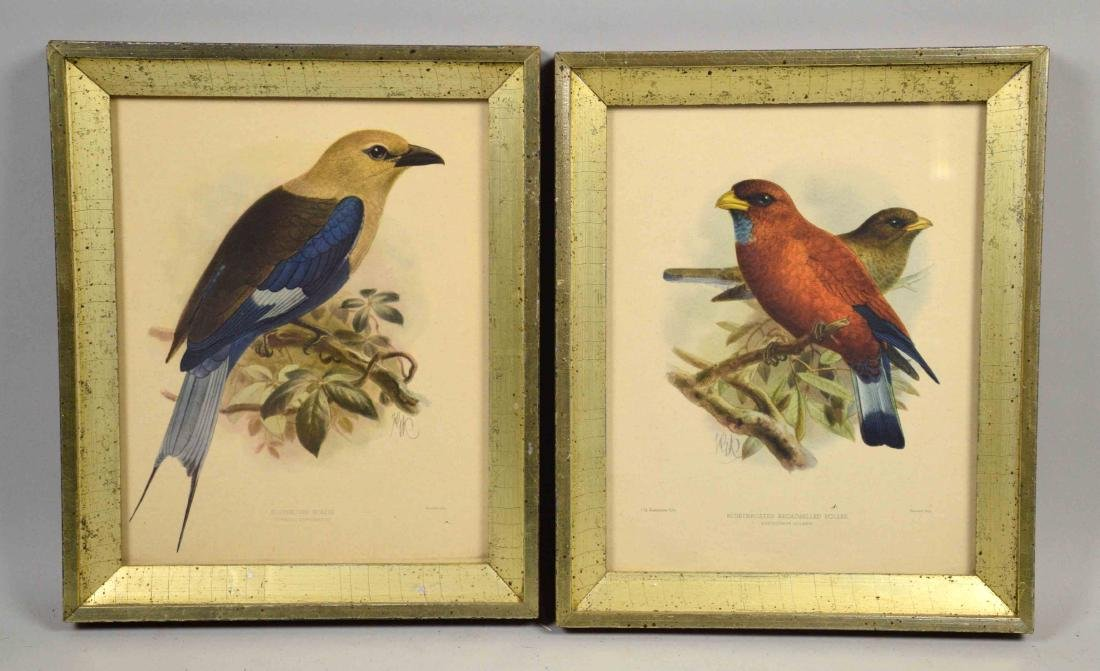 PAIR OF ENGLISH OFFSET LITHOGRAPHS OF BIRDS. J.G.