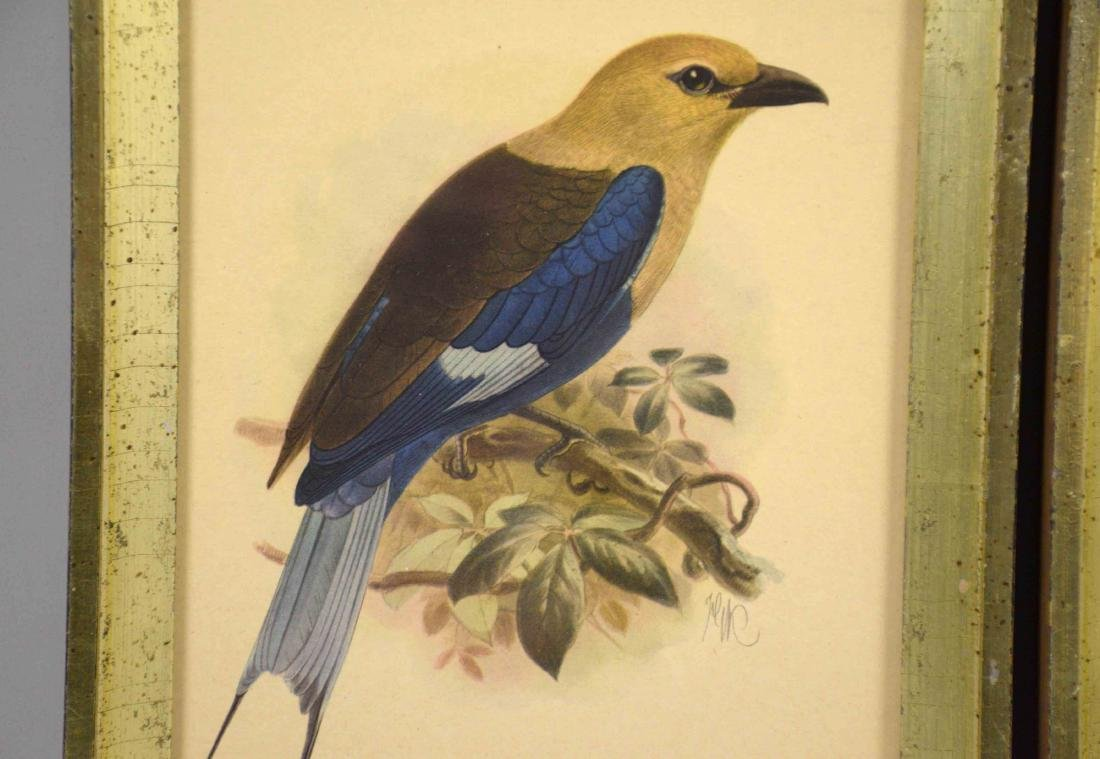 PAIR OF ENGLISH OFFSET LITHOGRAPHS OF BIRDS. J.G. - 2