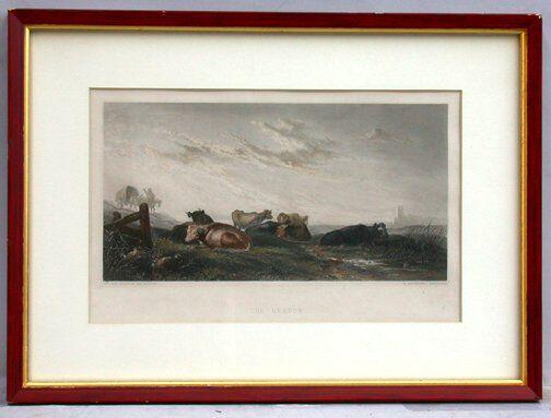 1522: R BRANDARD COW ENGRAVING. 19th c.  Engr