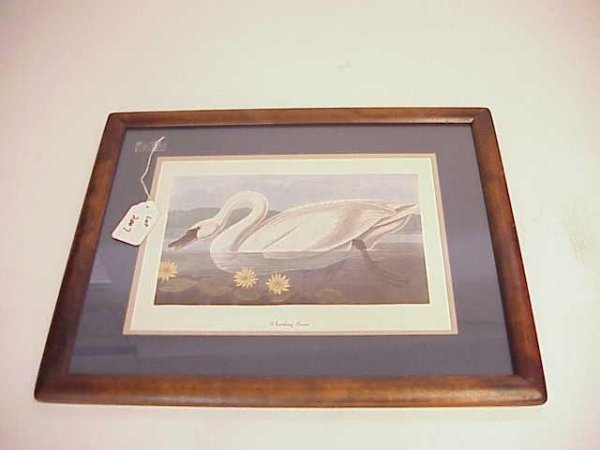 2007: FRAMED WHISTLING SWAN PRINT NO RESERVE