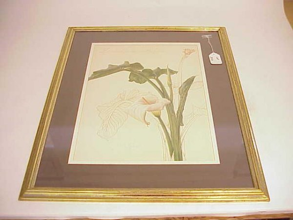 2010: LARGE FRAMED BOTANICAL LILY PRINT NO RESERVE