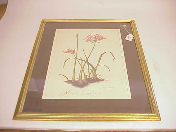 2011: LARGE FRAMED BOTANICAL LILY PRINT NO RESERVE