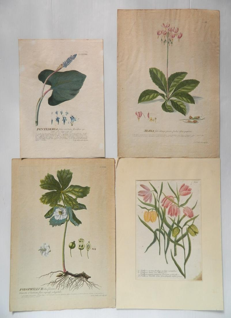 Johan Jakob Haid 3 botanical engravings