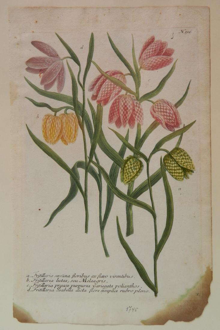 Johan Jakob Haid 3 botanical engravings - 3