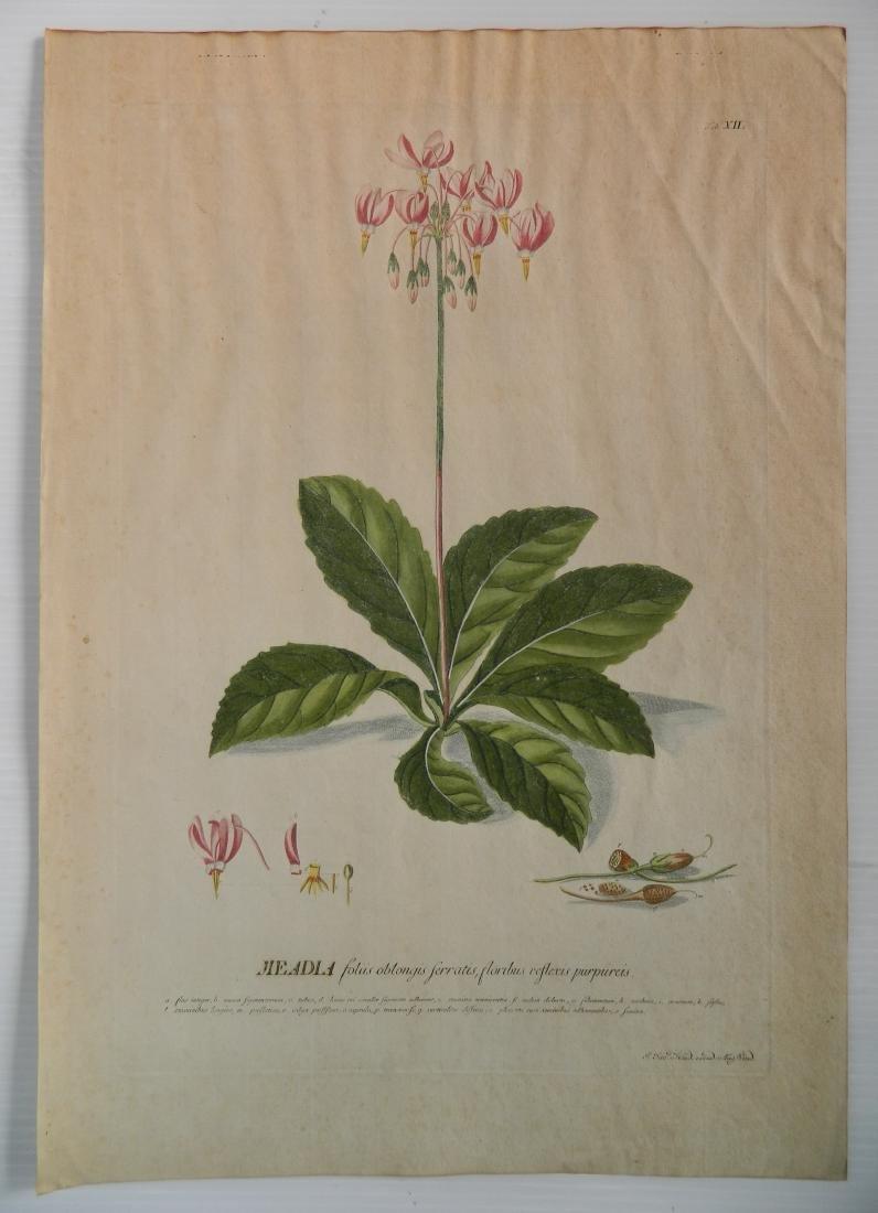 Johan Jakob Haid 3 botanical engravings - 4