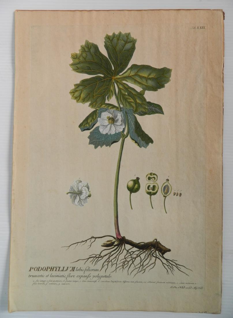 Johan Jakob Haid 3 botanical engravings - 5