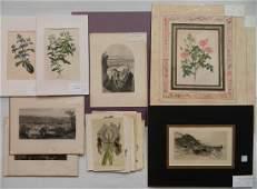 24 Historical and botanical prints
