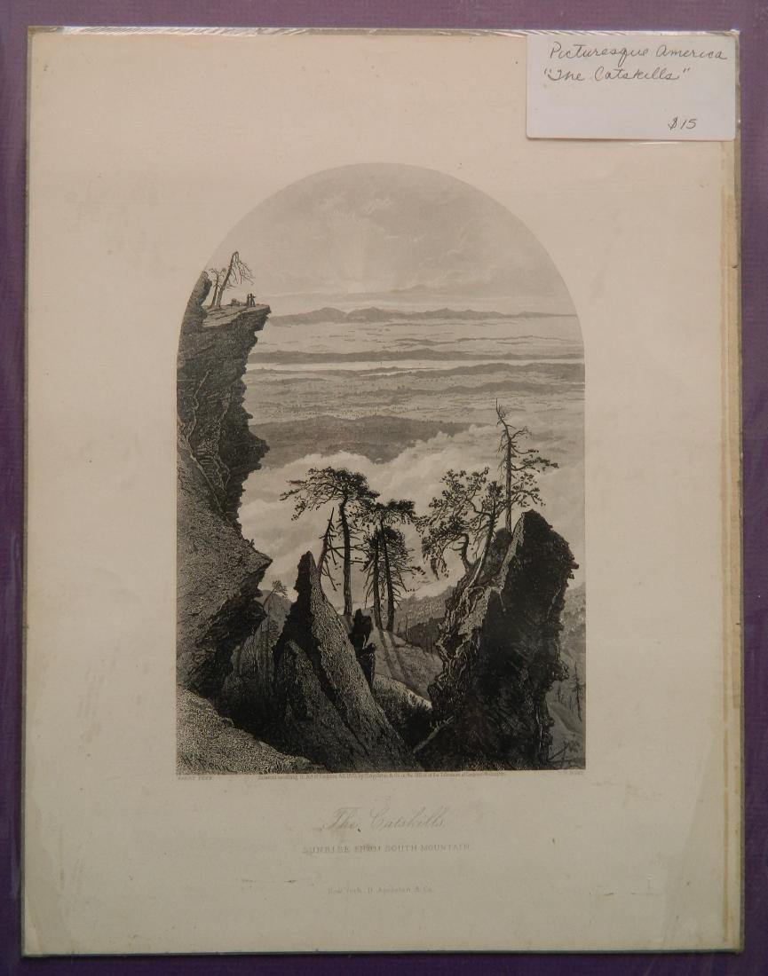 24 Historical and botanical prints - 3