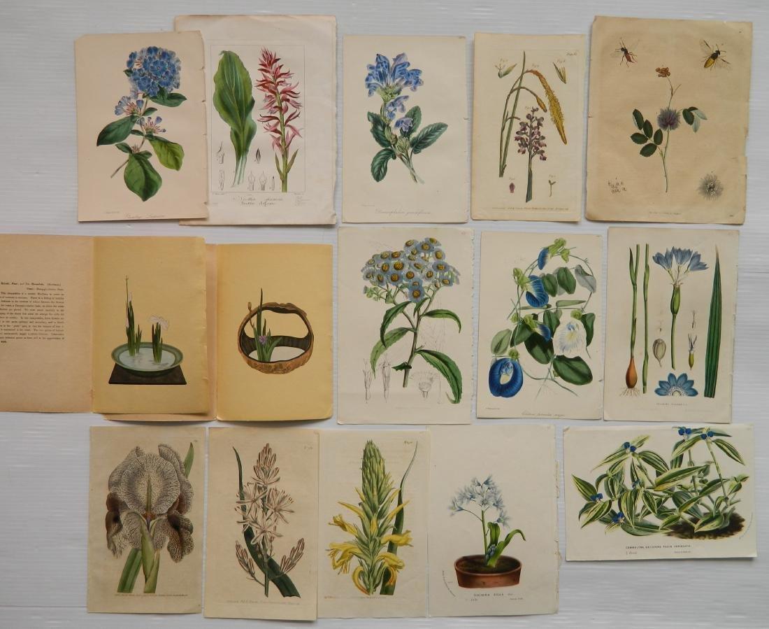 24 Historical and botanical prints - 7