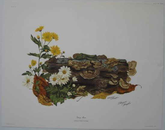 10: Mary Rose Wampler 5 off-set lithographs