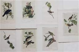254 7 handcolored lithographs after J J Audubon