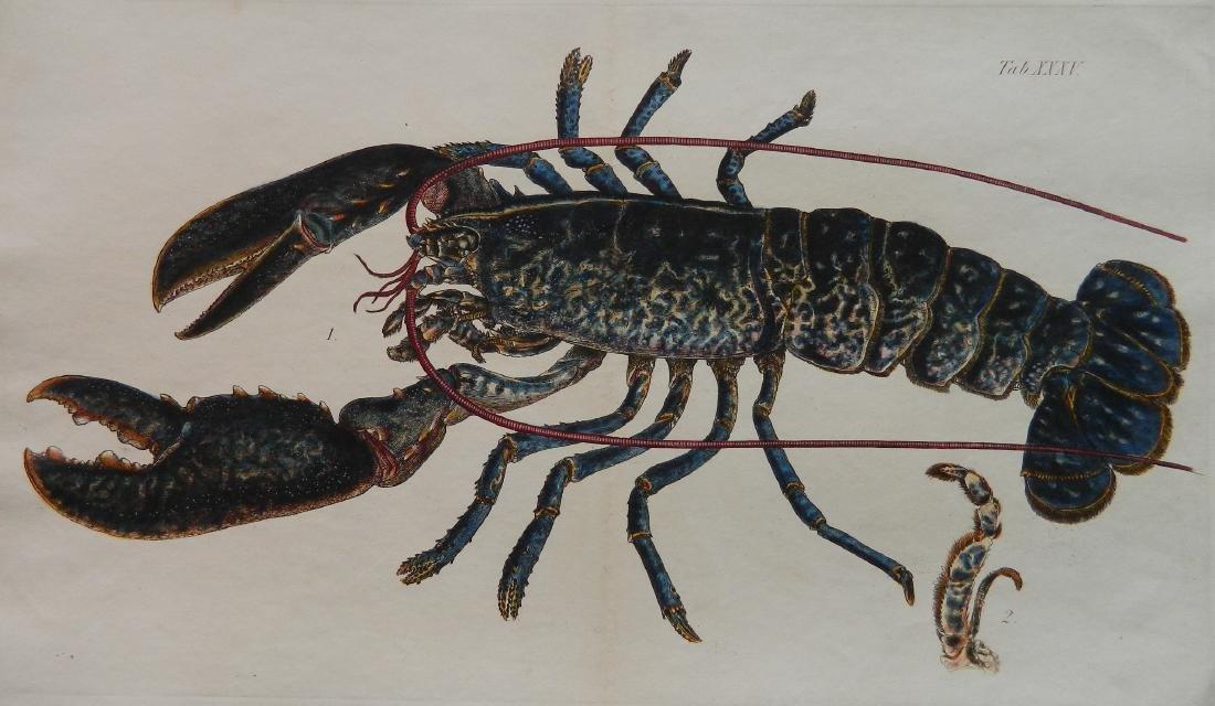 Lobster engraving
