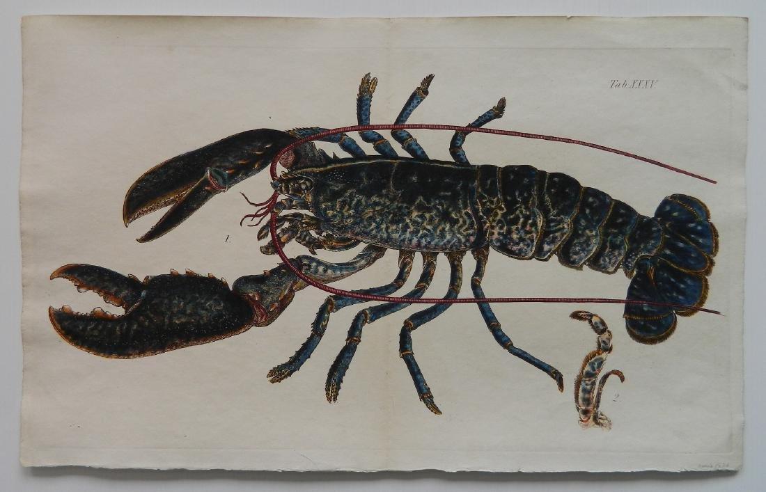 Lobster engraving - 3