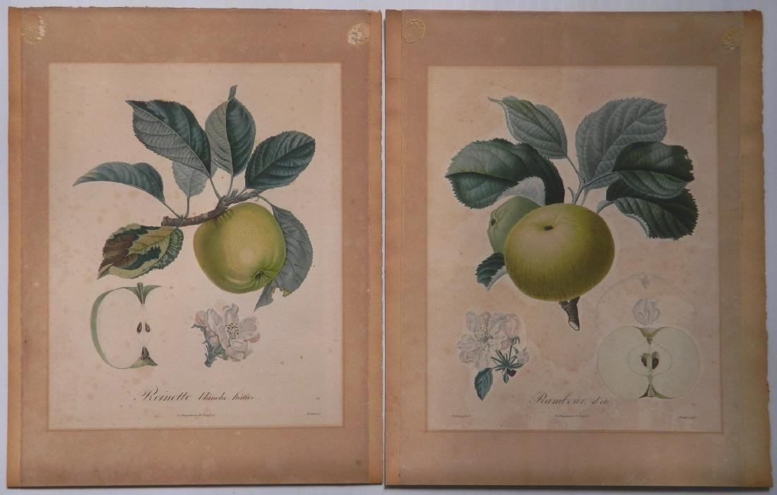 Pair of Botanical prints